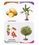 Фрукты, овощи, ягоды — фото, картинка — 4