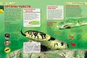 Змеи — фото, картинка — 3