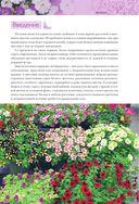 Петунии. От рассады до цветника — фото, картинка — 2