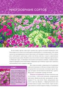 Петунии. От рассады до цветника — фото, картинка — 3