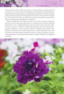 Петунии. От рассады до цветника — фото, картинка — 6