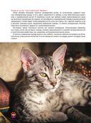 Кошки — фото, картинка — 8