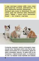 Кошки и котята — фото, картинка — 6
