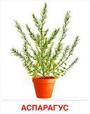 Комнатные растения (16 демонстрационных картинок) — фото, картинка — 2