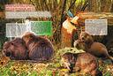 Животные планеты — фото, картинка — 5