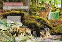 Животные планеты — фото, картинка — 7