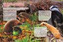 Животные планеты — фото, картинка — 8