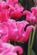 Весенние цветы — фото, картинка — 1