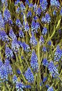 Весенние цветы — фото, картинка — 2